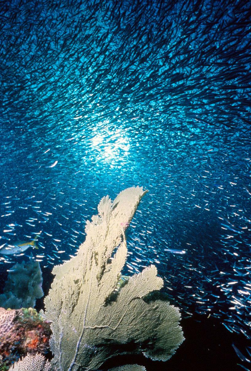 ocean acidification research paper Free ocean acidification papers, essays, and research papers.
