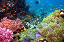 CoralReefEduc