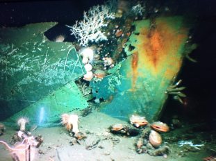 Hull of Ship Wreck